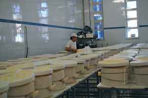 Grana Padano cheese in molds