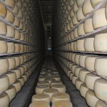 Young Grana Padano Cheese