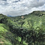 Postcards from Prosecco